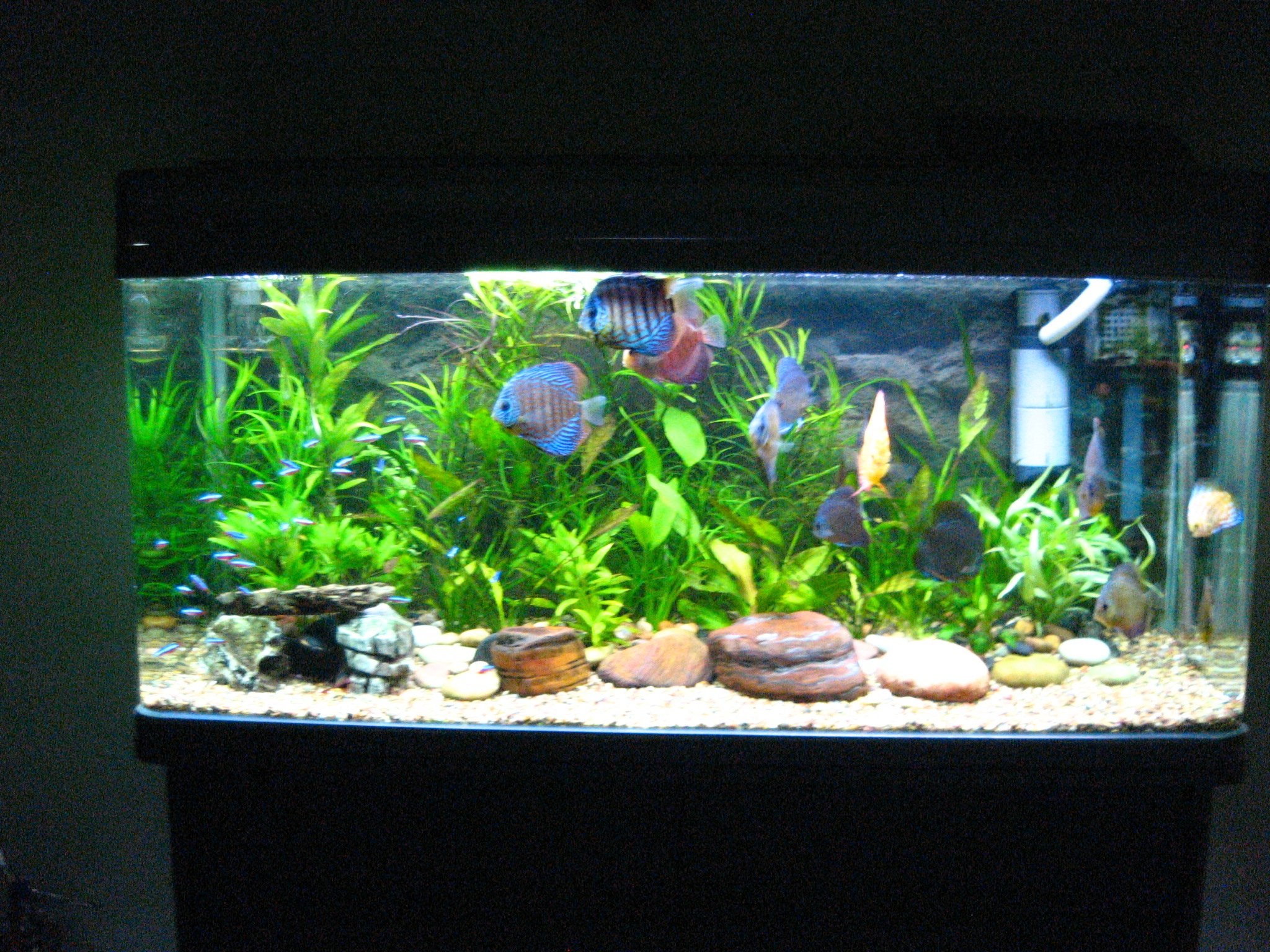 Akvarium rengimas ir prie i ra Beautiful aquariums for home